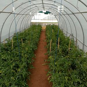Empresas de semillas/Viveros